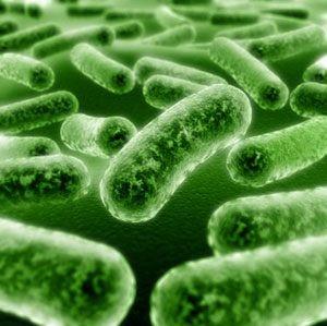 Probiotic giúp giảm mỡ và đốt cháy mỡ bụng