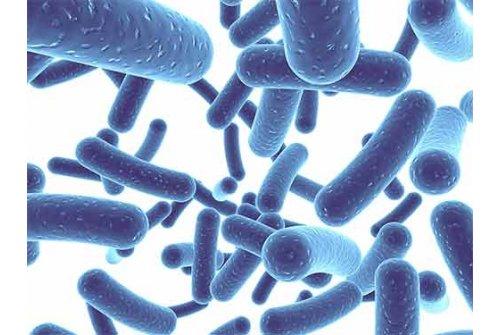 Các lợi ích về dinh dưỡng và sức khỏe của men visinh (Probiotics)