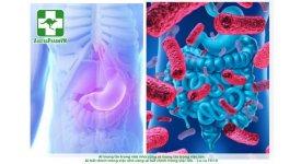 Vai trò hệ vi khuẩn đường ruột trong bảo vệ sức khỏe con người
